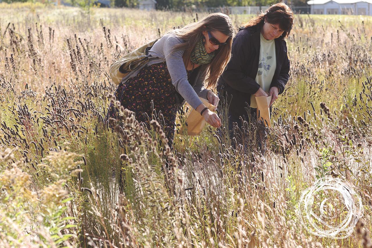 grassharvest