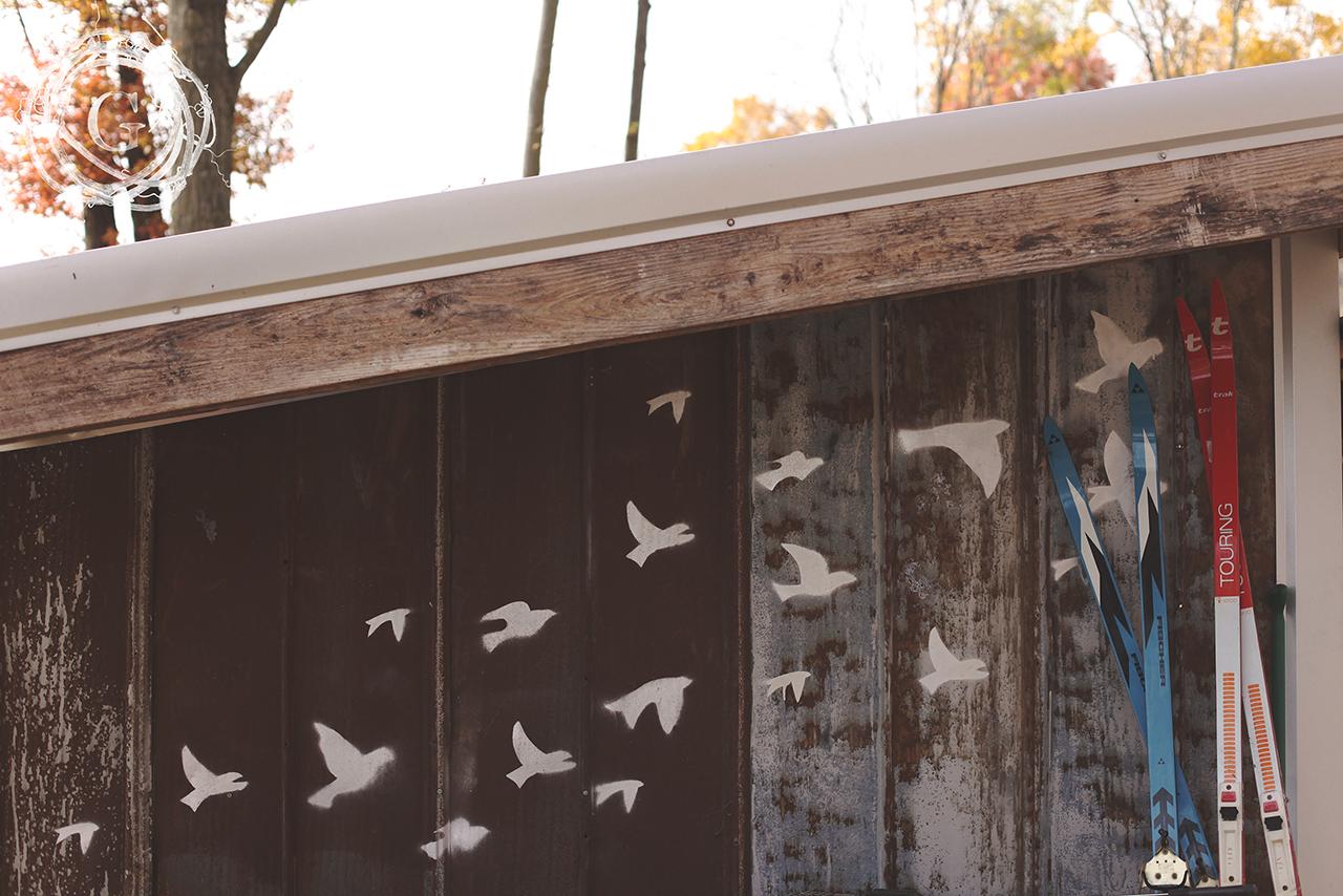 arynbirds
