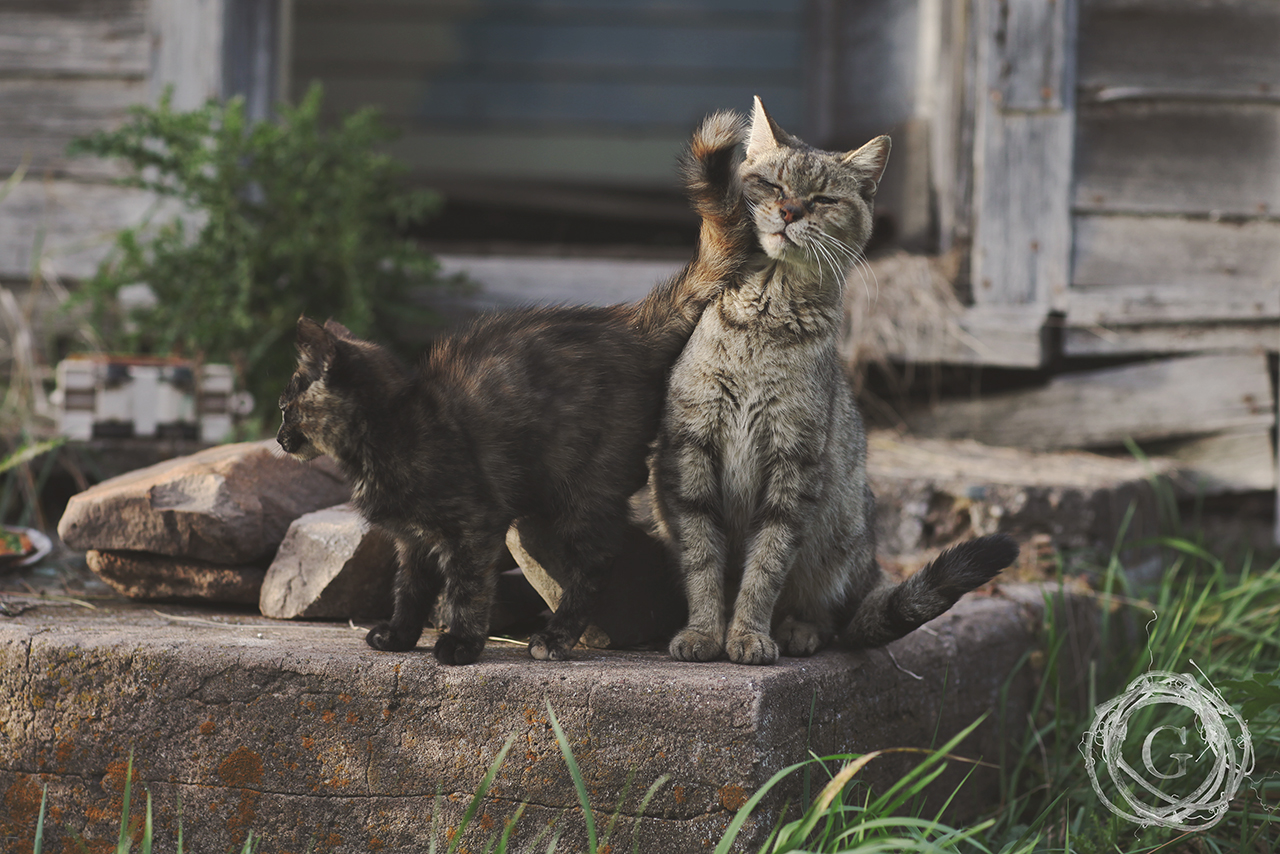 autumncats