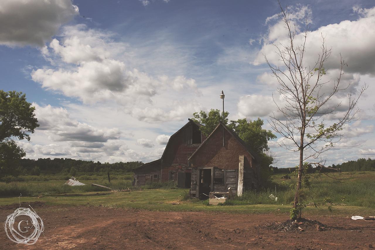 oldfarmnewfarmtree